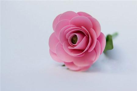 Học nhanh cách làm hoa hồng bằng giấy xốp tặng thầy cô